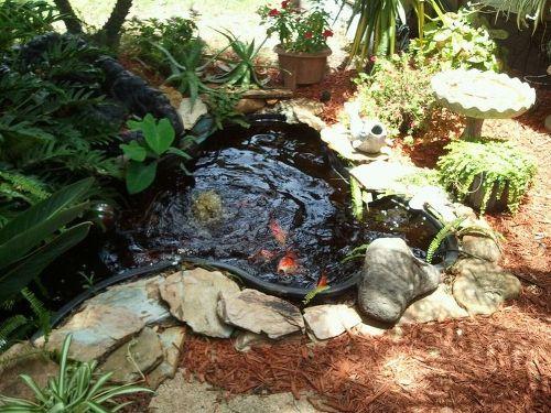Koi pond care hometalk for Koi pool singleton