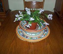 q cactus, electrical, gardening, cactus