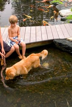 dogs love ponds, outdoor living, pets animals, ponds water features, A backyard pond provides cool relief for kids and pets alike