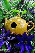 may garden birdhouses amp flowers, flowers, gardening, Teapot Birdhouse Jackmanii Clematis