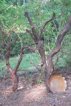 this award winning outdoor space was created by recycling fallen trees recycled, gardening, outdoor living, repurposing upcycling, My Root Art from a fallen tree