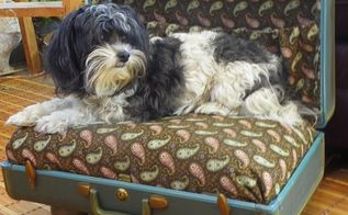 a vintage suite case gets a new life as a pet bed, repurposing upcycling, Well Molly likes it And YES she did need a bath