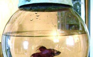 broken swag as a fishbowl, pets animals, repurposing upcycling, swag turned fish bowl