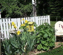 the garden entrance holy hocks yellow iris herb garden, gardening, The herb garden plus yellow iris and hollyhocks