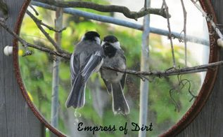 using mirrors in the garden, flowers, gardening, This mirror is actually a lazy susan hung on the garden gate Chickadee has a new best friend