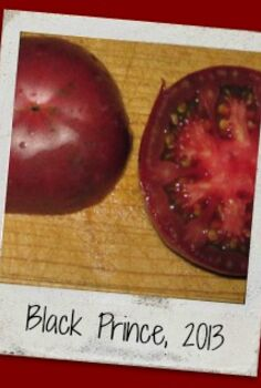 http homesteadlady com how to save tomato seeds, gardening