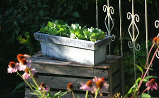 container water gardens, container gardening, gardening, ponds water features, A container you already have on hand becomes a small water garden filled with water lettuce