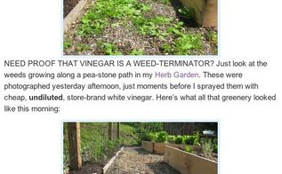 q a friend sent a post from another site about killing weeds with vinegar i m posting, flowers, gardening
