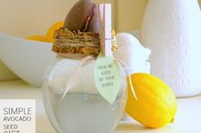 a simple avocado seed gift, crafts, A gift of an avocado seed