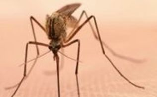 q mosquitoes love me last weekend i was eaten alive while doing yard, outdoor living, pest control