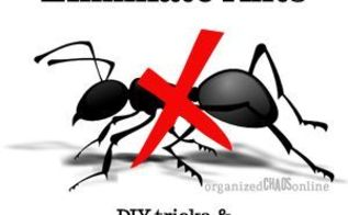 diy ant killer and exterminator recommendations, pest control
