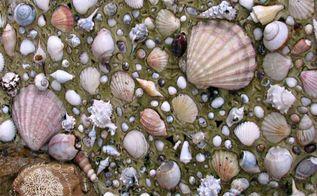 seashell art, crafts, Seashell Art diy