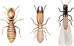 i went for many years without any termite protection on my now 34 yr, pest control