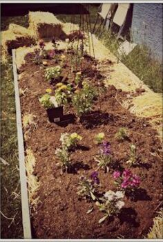 introduction to lasagna gardening, gardening, homesteading, raised garden beds, The finished product