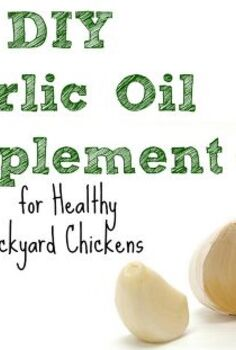 diy garlic oil supplement for healthy backyard chickens, homesteading, pets animals