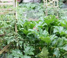 vegetable garden grow your own, gardening