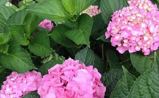 garden walk yard newjersey, flowers, gardening