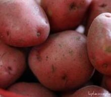 fall potatoes, gardening