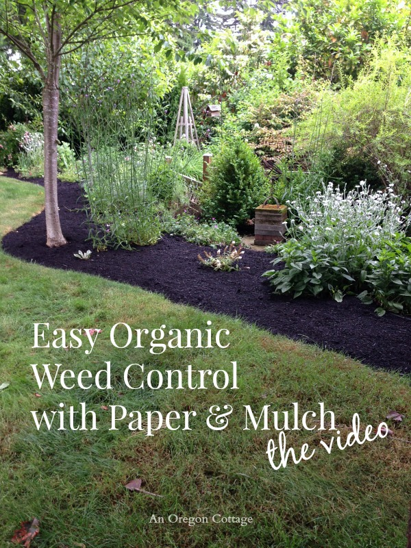 Easy Organic Weed Control With Paper Mulch Hometalk