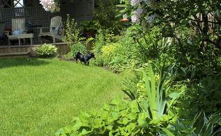 gardening backyard before after, gardening