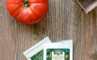 gardening tomatoes tips how to, gardening