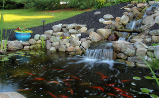 backyard landscape design pond rebuild, landscape, outdoor living, ponds water features, the new pond