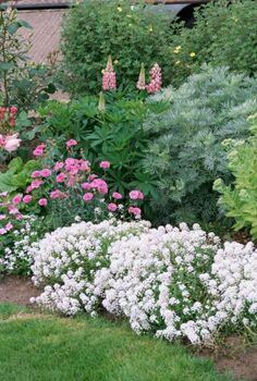 gardening landscape transformation, flowers, gardening, landscape