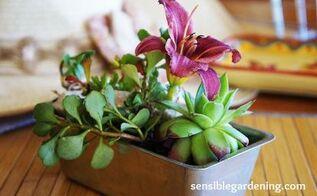 gardening ideas indoor planter mini cake pan, container gardening, gardening, repurposing upcycling