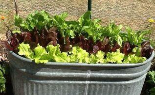 gardening vegetable fruit garden backyard, container gardening, gardening