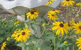 late summer yard tour my august blooms, container gardening, flowers, gardening