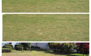 grass patching rids the balding spot, landscape, lawn care