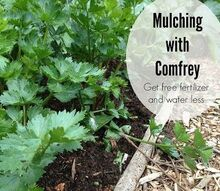 gardening tips comfrey mulching guided, gardening, landscape