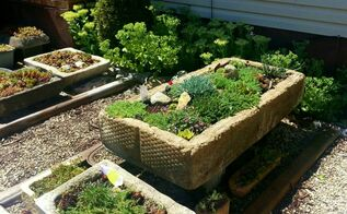 garden tips ants removing planter hypertufa, container gardening, flowers, gardening, pest control