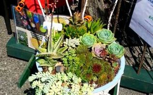 succulents chair planter, container gardening, flowers, gardening, repurposing upcycling