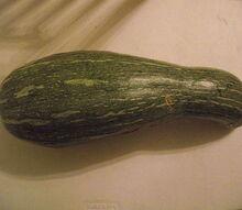 q gardening zucchini squash identifying uses, gardening