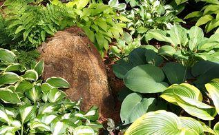 gardening tips hosta divide fall spring, gardening, landscape