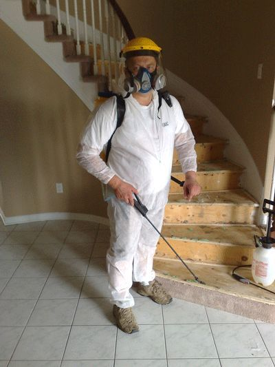 How To Get Rid Of Black Mold Hometalk
