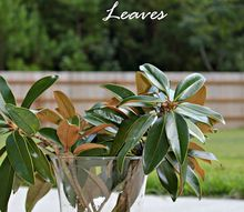 how to preserve magnolia leaves diy magnolia wreath, crafts, flowers, gardening, how to