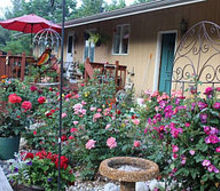 garden tips rose designing, flowers, gardening