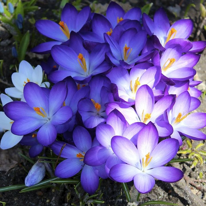 Recommended Spring Flowers For Your Garden