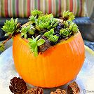 fall decor pumpkin planter succulents, container gardening, gardening, seasonal holiday decor, succulents