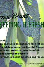 gardening harvest green beans preserving fresh, gardening, homesteading
