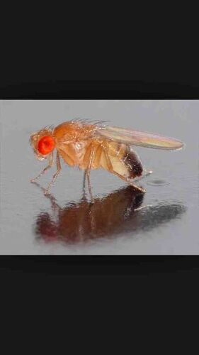 how to get rid of fruit flies in worm farm