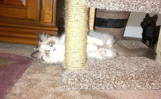diy kitty scratching post bed build, diy, pets animals, woodworking projects