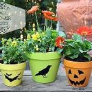 fall flower pots, flowers, gardening, repurposing upcycling, seasonal holiday decor, Give your flower pots a fresh look for fall