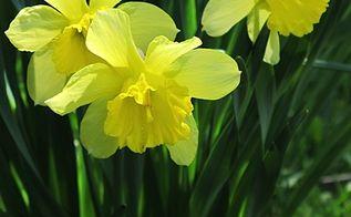 gardening fall plant spring bulbs, gardening
