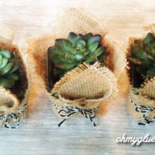 succulents creating easy quick, container gardening, crafts, succulents