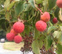 fruit tree id, gardening