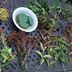 fall centerpiece from backyard garden, gardening, how to