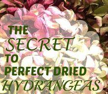 hydrangea drying tips, gardening, home decor, hydrangea